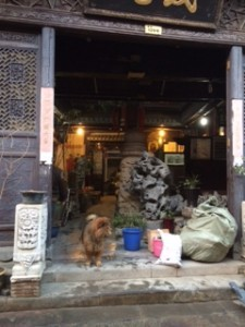 Dog on Duty - Huangshan Old Town