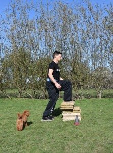 Adam steps up onto the pile of paving slabs as a tiny red poodle looks on.