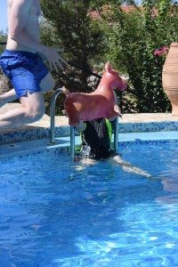 A young man in blue shorts jumps towards a red plastic donkey in a swimming pool